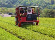 2018年産京丹後茶摘採開始