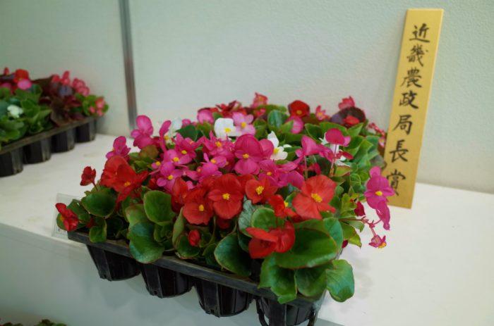 平成30年度京都府春季花き品評会