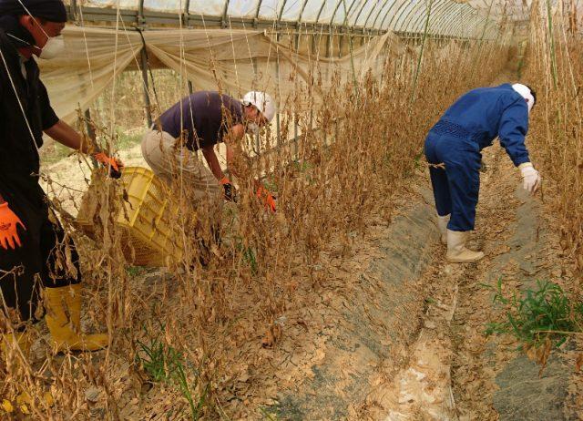 西日本豪雨被害の復旧ボランティア