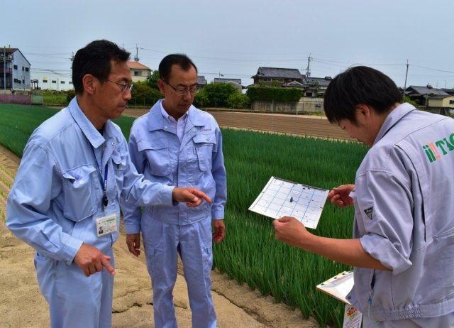 ネギシロイチモジヨトウの防除試験継続中