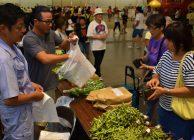 京セラ夏祭りで旬の京野菜を販売