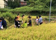 地元小学生が稲刈り体験